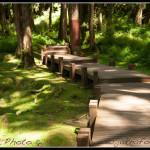 Národní park Alishan