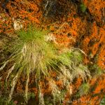 Azorské ostrovy - flora