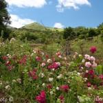 Azorské ostrovy krajina na Picu