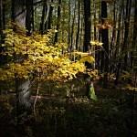 Průnik světla v podzimním lese