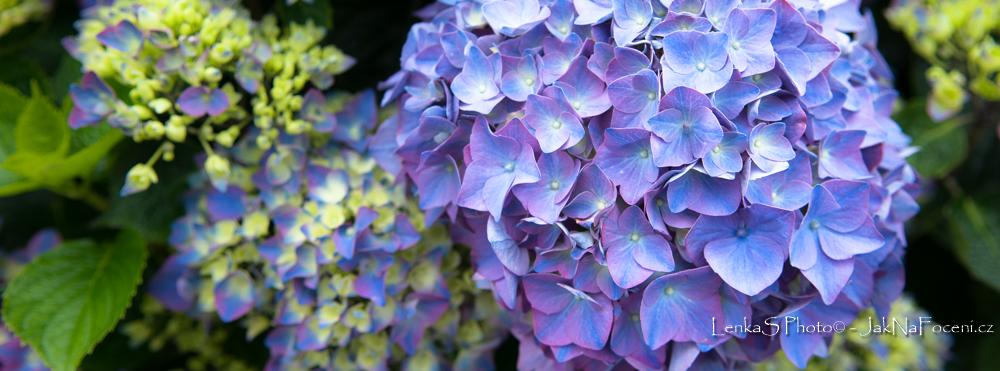 FB cover květy