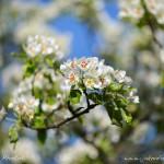 Jarní tapeta z Petřína na PC