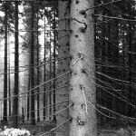 Krkonošský les