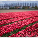 Noordoostpolder Holandsko