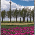 Pole a větrník