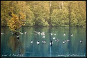 Rockwood Lake a husy