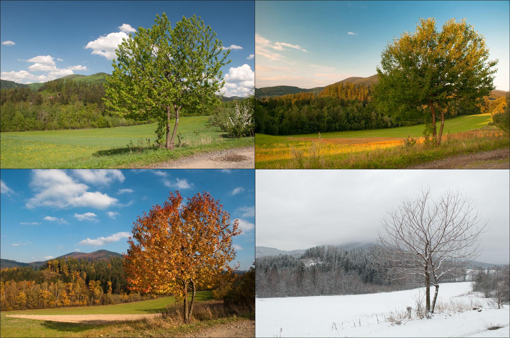 4 Roční období a jeden strom