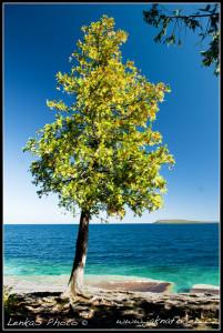 Strom na břehu Huron Lake