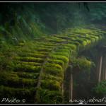 Tchaj-wan - Opuštěná železnice v Taipingshanu IV