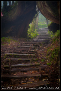 Taipingshanský prales