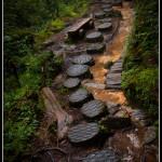 Tchaj-wan - Stezka lesem