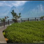 Čajová plantáž v oblasti Alishan II