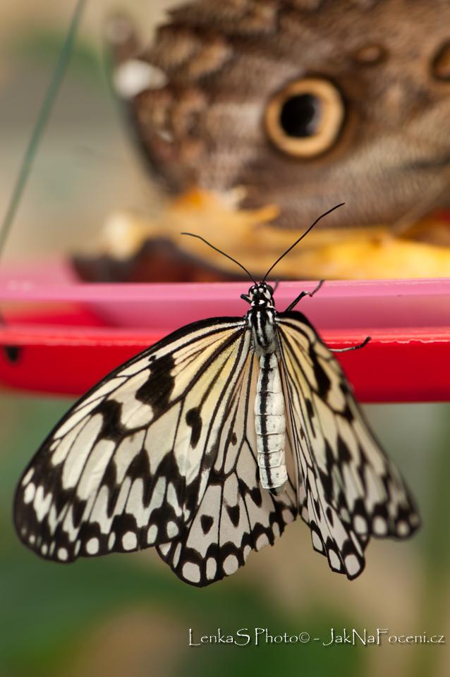 Tapeta na mobil motýl