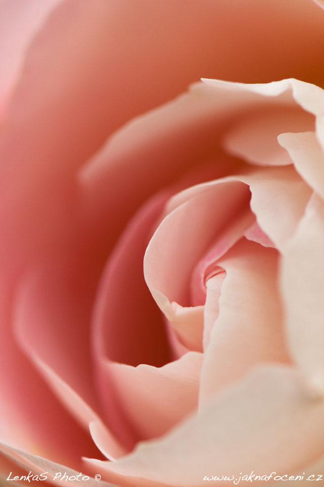 Tapeta na mobil růže