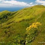 Tapeta na plochu - letní krajina