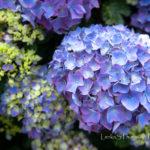 Tapeta na pozadí - květiny