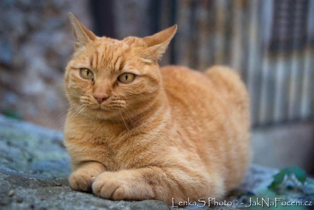 Kompozice - portrét kočky