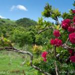 Azory Pico krajina II