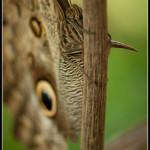 Butterfly conservatory Kitchener