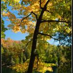 Crawford lake II