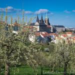 Pražský hrad z jarního Petřína