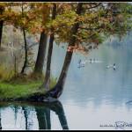 Klid u Rockwood Lake