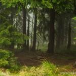 Krkonoše les