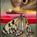 Motýlí farma Kitchener