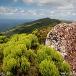 Ostrov São Jorge zelená krajina