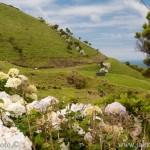 Pico kopce