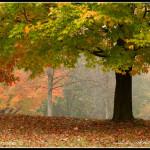 Podzimni romance II