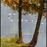 Rockwood Lake